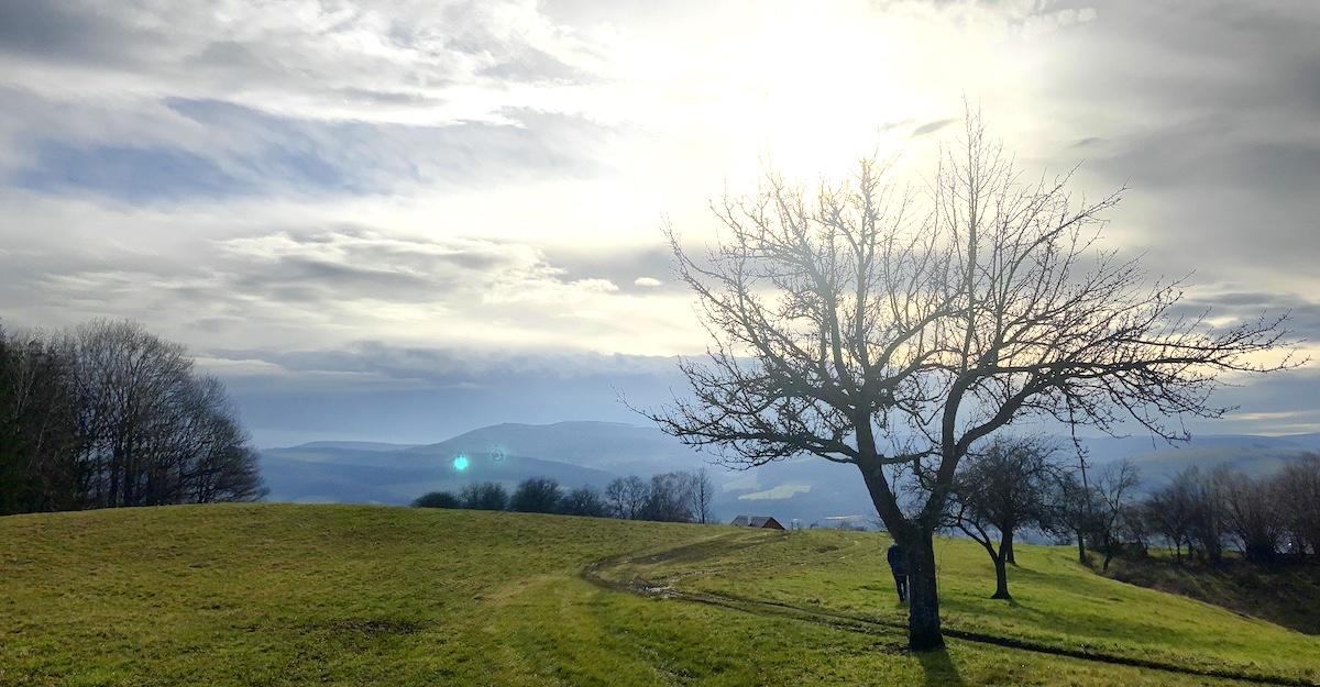 strom zuzica