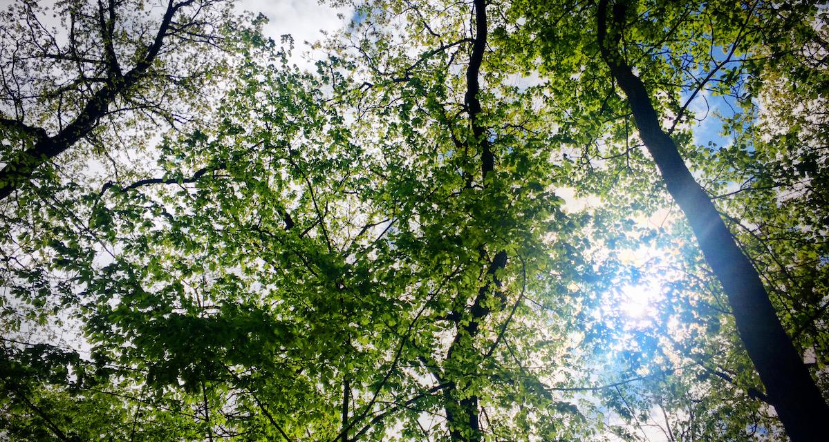 stromy_zuzica